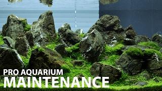 Aquarium maintenance in 1 hour at Green Aqua - 240L display