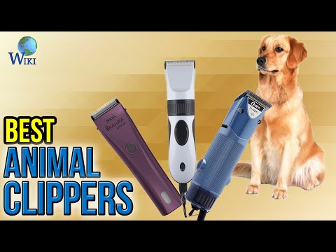 7 Best Animal Clippers 2017