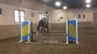 Sarah Fernandez - Equestrian
