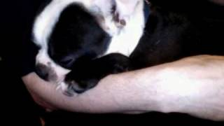 Breast-feeding dog - PART 2