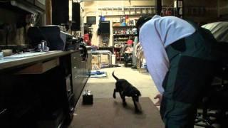 My Puppy Bear Dog Training Progress Report-age: Week 10