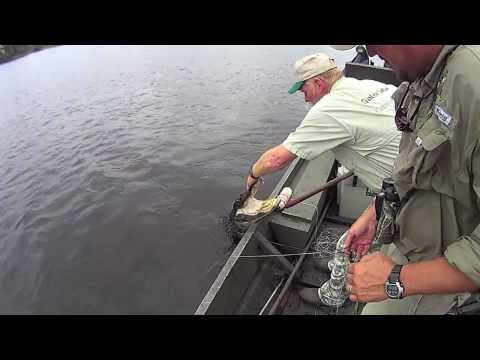 South Carolina Alligator Hunt Aka Harvesting From Beggining To End In HD