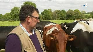 Reportage chez un éleveur bovin après la baisse annoncée de la PAC
