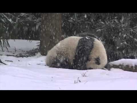 Bao Bao's First Snow Day!