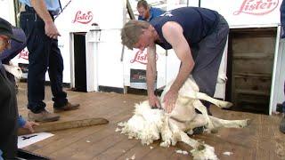 Cneifio Hen Law 61+ rhag 2 | Veterans Shearing 61+ pre 2