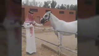 Riyadh : Bản tình ca măng đen.