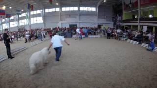 Монопородная выставка породы Южнорусская овчарка
