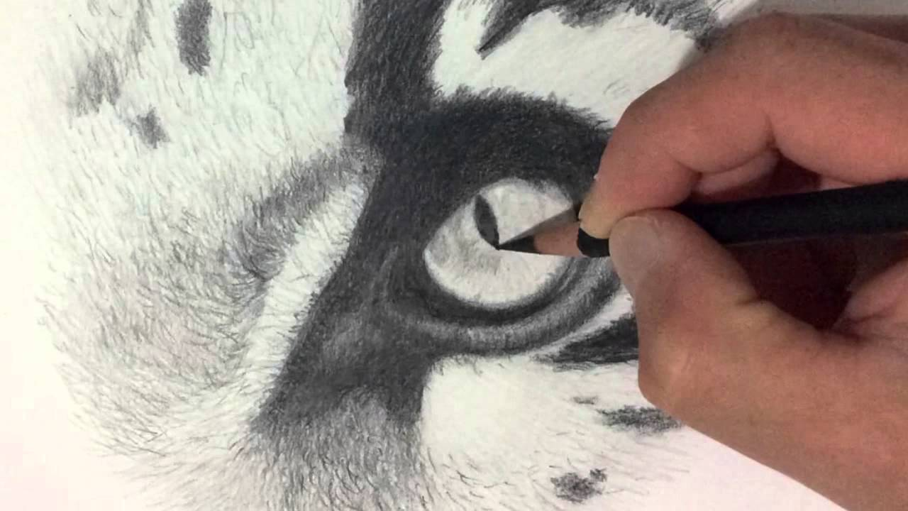 how to draw a realistic snow leopard