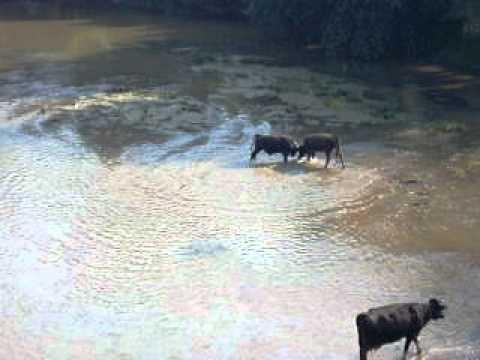 Toros en Bulgaria...o el valor de un polvo