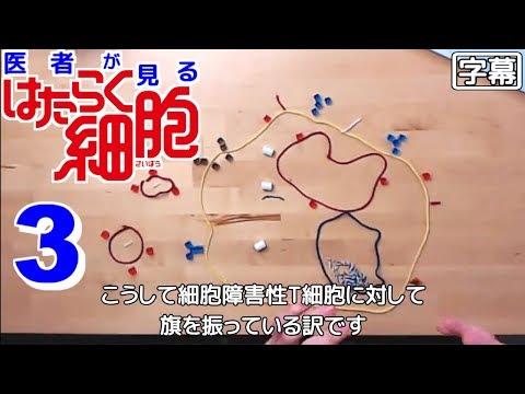 【日本語字幕】医者が見る はたらく細胞 3話 (本人が活性化してる) 外国人の反応