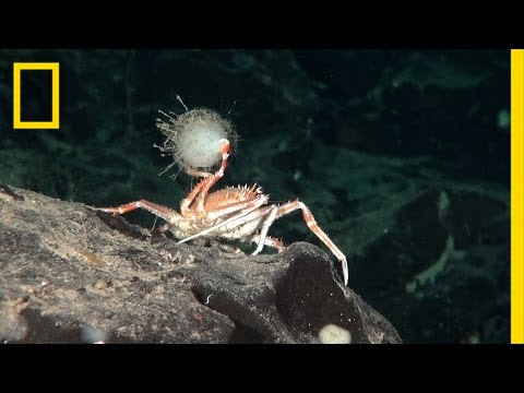 10 Weirdest Creatures in Chile's Newly Protected Seas | National Geographic
