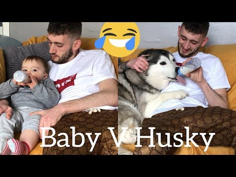 The Funny Similarities Between My Husky & My Baby!!... [TRY NOT TO SMILE CHALLENGE]