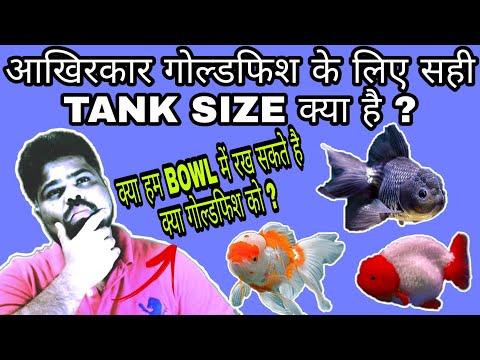 The Perfect Tank Size For Goldfish | गोल्डफिश के लिए सही टैंक साइज क्या है