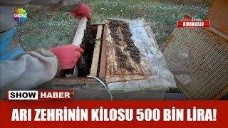 Arı zehrinin kilosu 500 bin lira!