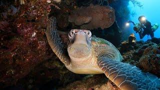 3D Tubbataha Philippines.(Дайвинг сафари на рифах Туббатаха, море Сулу, Филиппины. Корабль Hans Christian Andersen. Возможен просмотр в 3D режиме...., 2012-12-18T10:11:38.000Z)