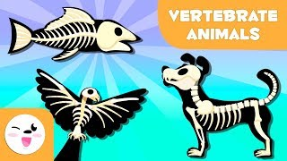 Vertebrate Animals For Kids: Mammals, Fish, Birds, Amphibians And Reptiles