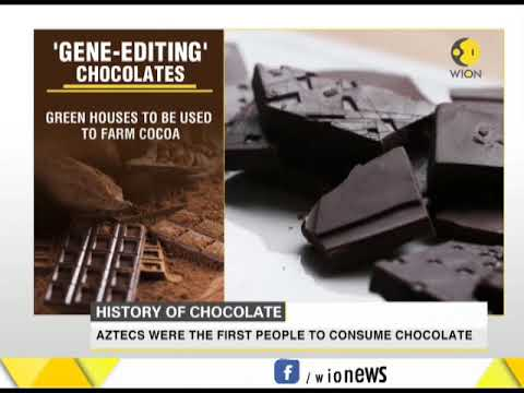 Saving the 'chocolate': DNA of cacao to be altered through gene-editing
