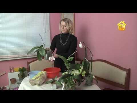 видео: Орхидеи. Покупка, уход, пересадка // forumhouse