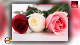 Скачать Alla Pugacheva Million Roses