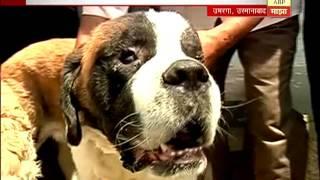 उस्मानाबाद : गायकवाडांचे दोन कुत्रेही मालकाच्या भेटीसाठी आतुर