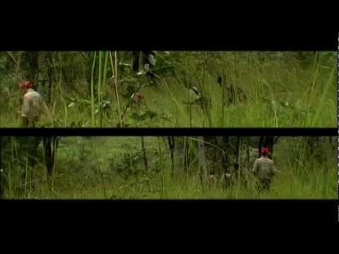 Strain Hunters Malawi Hungarian Subtiles