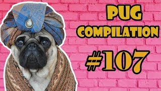 Puppy NEW Pug Compilation 107  - Funny Dogs but only Pug Videos | Instapugs