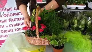видео Бизнес-идея: уход за комнатными и офисными растениями