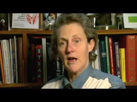 I Am Angus - Temple Grandin on Animal Welfare