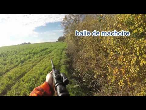 Battue Sanglier/tir D'une Compagnie De 10 Sangliers En Plaine (jo)