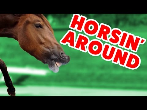Top Funniest Horse Videos of 2016 Weekly Compilation | Funny Pet Videos