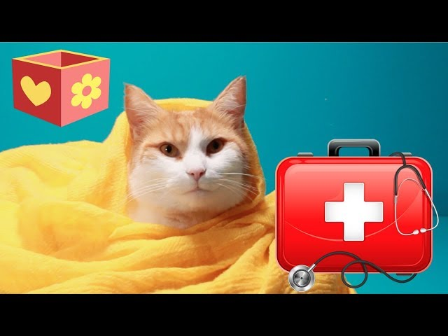 Simba is sick | Bellboxes | Cute Cat aww for children | 11