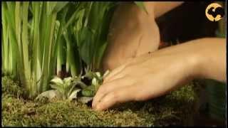 Ботаника. Каллы и мох