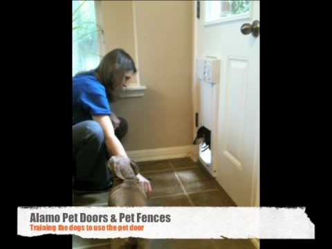 High Tech Power Pet Door Install And Training Youtube