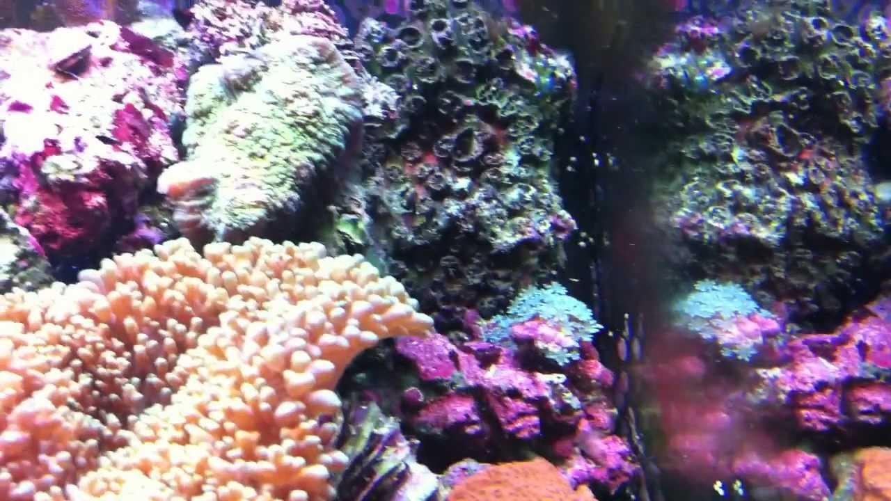Biocube 14 Gallon Aquascape Nano Saltwater Reef Tank Aquarium By Phenixmedia