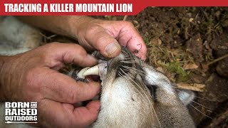 TRACKING A KILLER MOUNTAIN LION