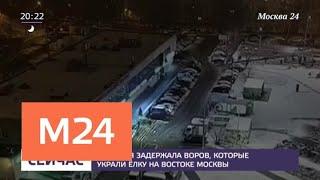 Смотреть видео В Москве задержали похитителей новогодней елки - Москва 24 онлайн