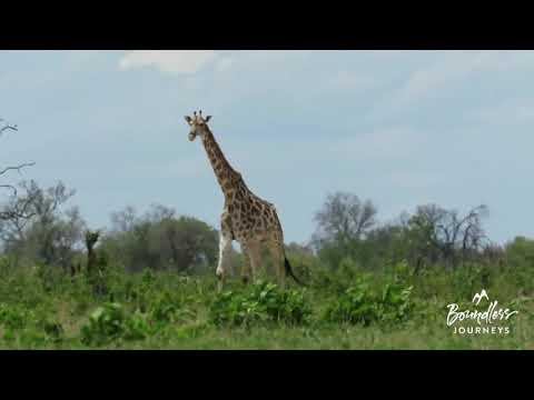 Boundless Journeys' Zimbabwe: Custom Safari