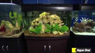 Talking fish- Different types of Aquarium choices - Aqua One