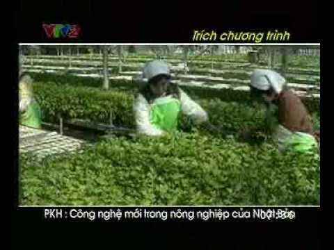 Công nghệ trồng rau sạch Nhật Bản - www.rausach.com.vn