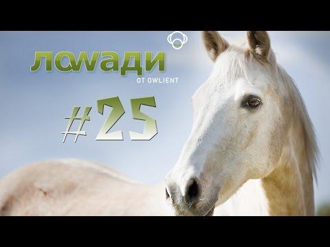 Видео Симулятор лошади онлайн
