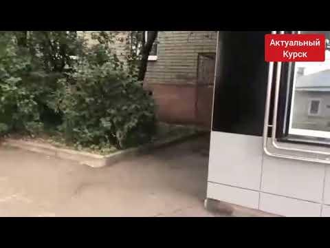 Ответ владельца питбуля, который напал на кошку в г. Курск