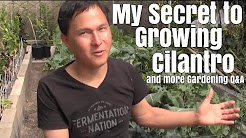 My Secret to Growing Cilantro & More Garden Q&A