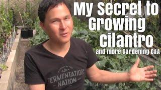 My Secret to Growing Cilantro & More Garden Q&A