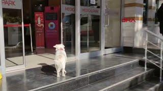 Dog waits outside hospital for…