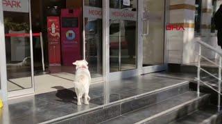 Dog waits ou…