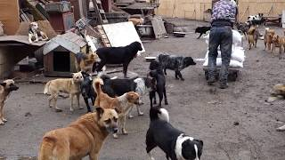 "ОНИ ВАС ЖДУТ.Приют для собак""КОВЧЕГ"".Shelter for animals ""ARK"". Odessa."