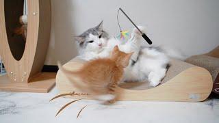 광복이가 처음으로 고양이랑 노는 법을 배웠어요