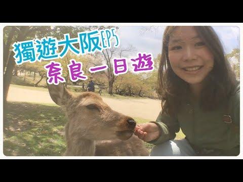 【VLOG】獨遊大阪 EP 5 ❤ 奈良公園 /國立博物館/春日大社/興福寺/東大寺