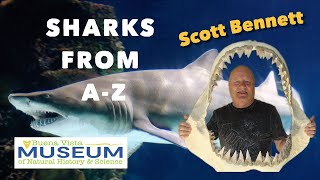 Sharks From A-Z with Scott Bennett