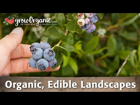 Organic, Edible Landscapes